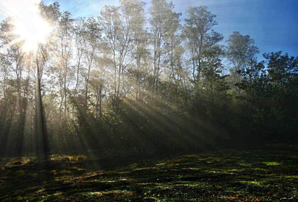 Grüner Wald mit Schattenwurf der Bäume im Sommer